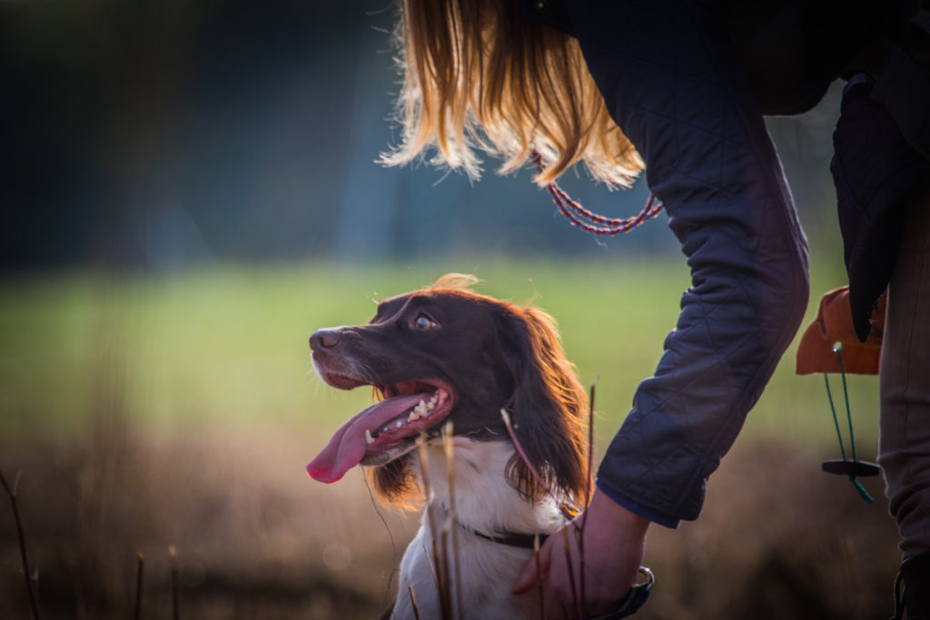 individual dog training in herts beds cambs