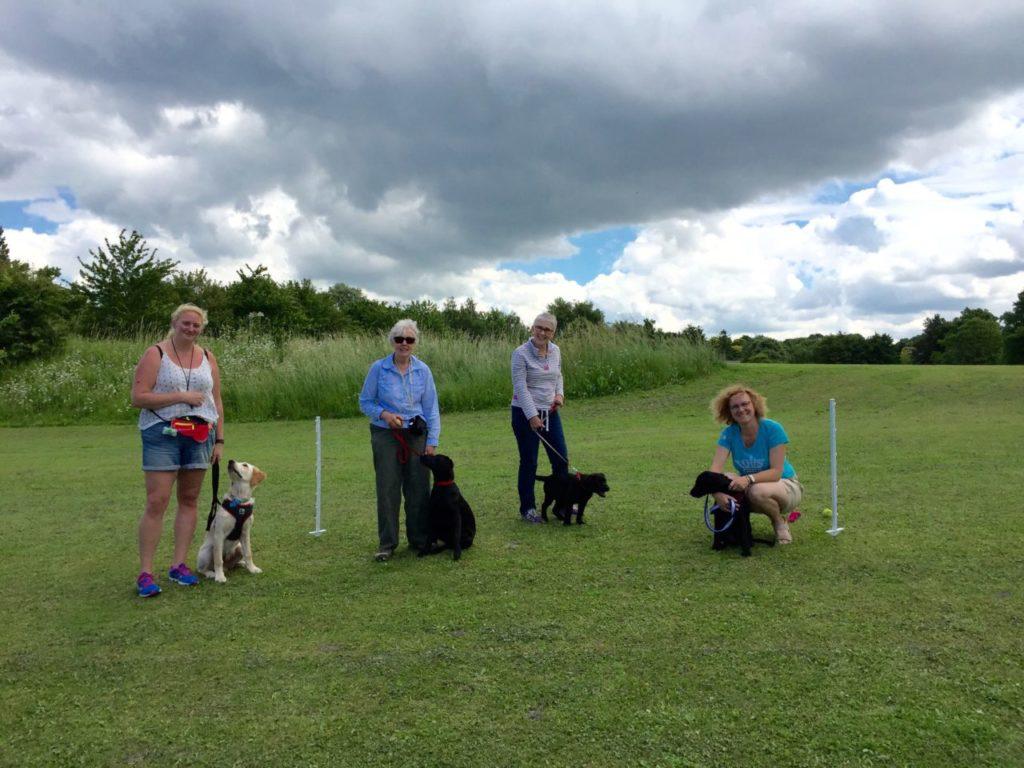 Gundog Puppy training class in steeple morden herts beds south cambridgeshire