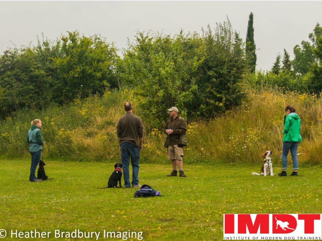 reward based gundog training in Cambridge Hertfordshire Bedfordshire